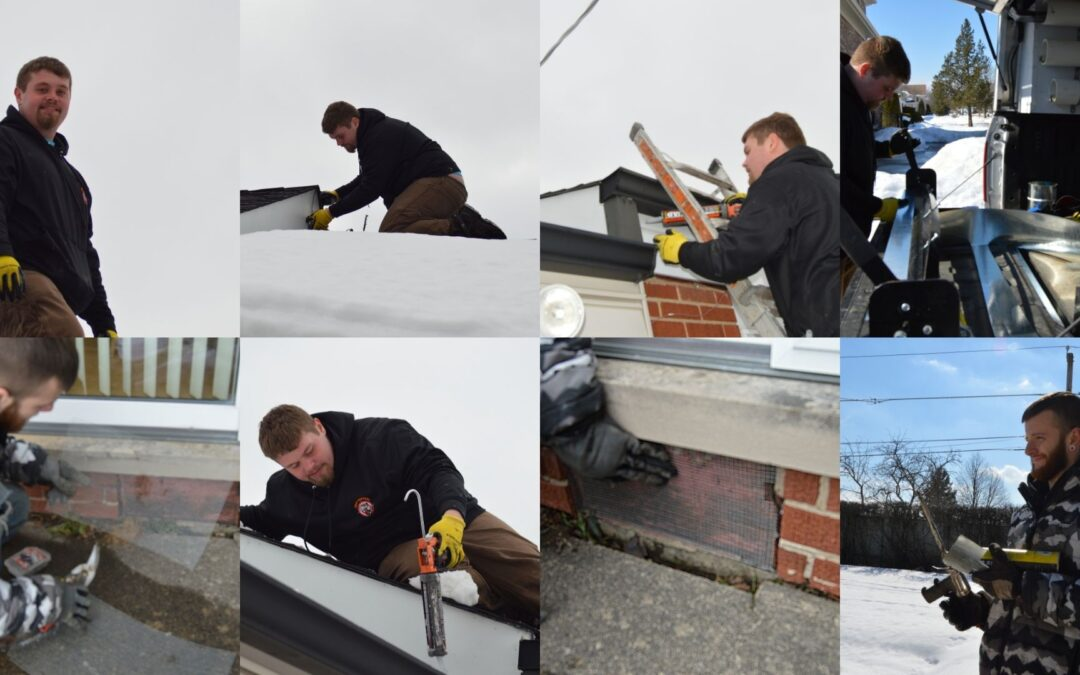 Mice Proofing and Home Inspection in Morton Grove IL