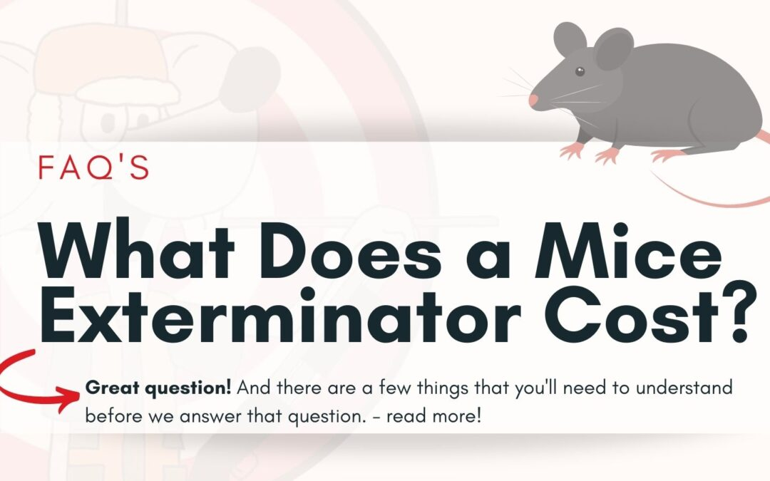 What Does a Mice Exterminator Cost?