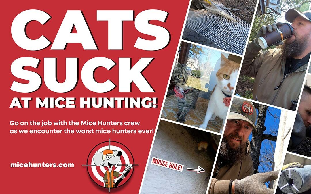 CATS SUCK at Being Mice Hunters | But not Mice Hunters!